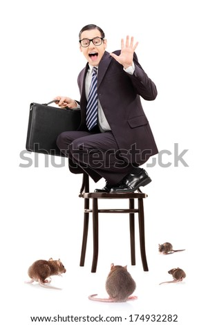 Terrified young businessman standing on chair in the middle of rat invasion isolated on white background - stock photo