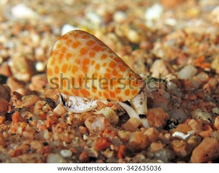 Tessellate cone shell over sand at night
