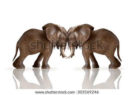 test of strength concept elephants pushing against each other isolated on white background - stock photo