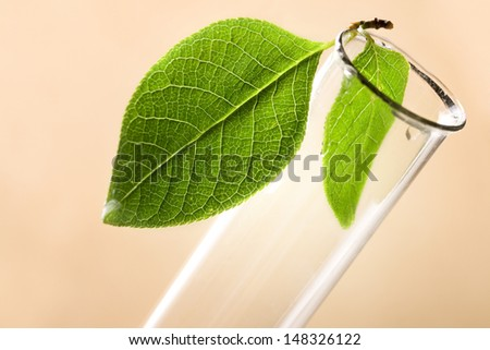 Test tube and green leaf - stock photo
