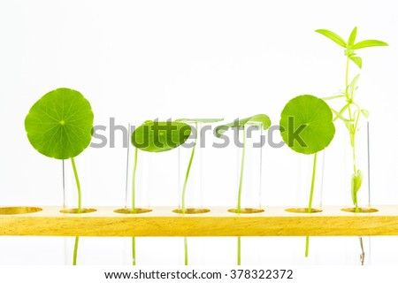 Test tubes,Laboratory research of plant - stock photo