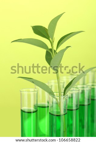 Test-tubes with a green solution and the plant on yellow background close-up
