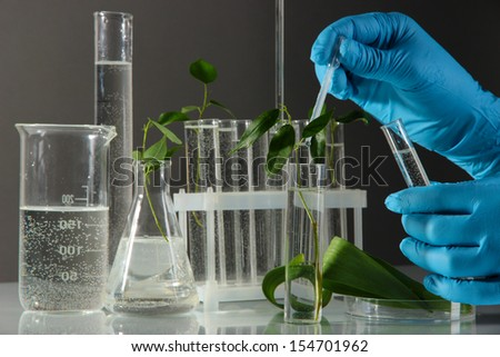 Test tubes with plant on gray background - stock photo