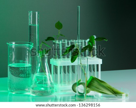 Test tubes with plant on gray-green background