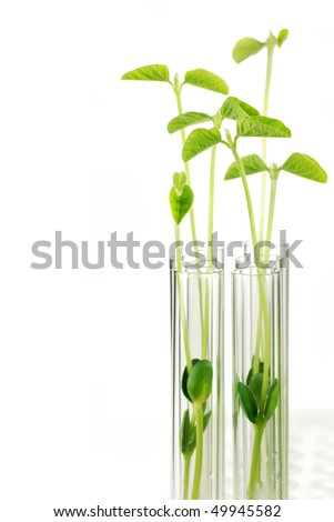 Test Tubes with small plants,Isolated on white. - stock photo