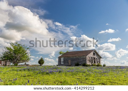 texas bluebonnet field and abandon barn