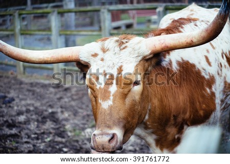 Texas Longhorn in color - stock photo