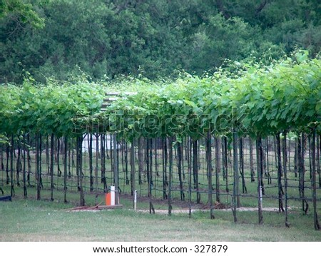 Texas vineyard in the spring - stock photo