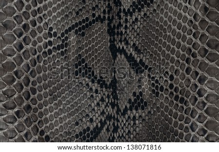 Texture background black and white snake leather - stock photo
