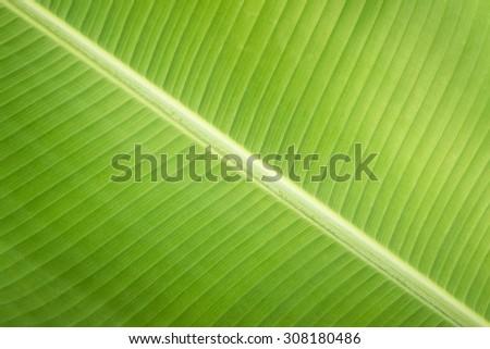 Texture background  fresh green Leaf - stock photo