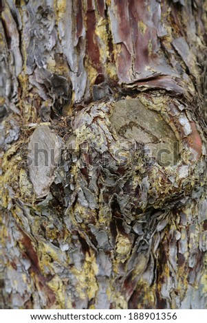 texture & background from a tree bark - stock photo
