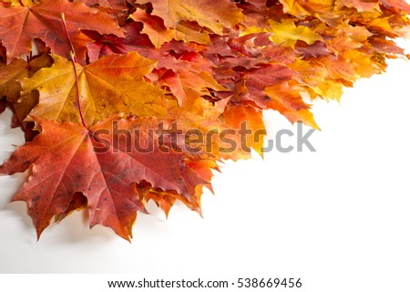 texture, background. Maple Leaves yellow shades of red and gold. Leaves abstract Laid for photos. the leaf of the maple, used as an emblem of Canada.