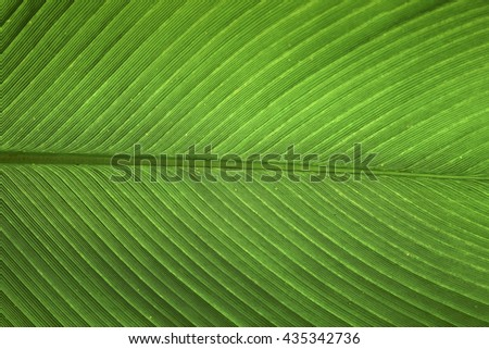 texture background of big green leave - stock photo