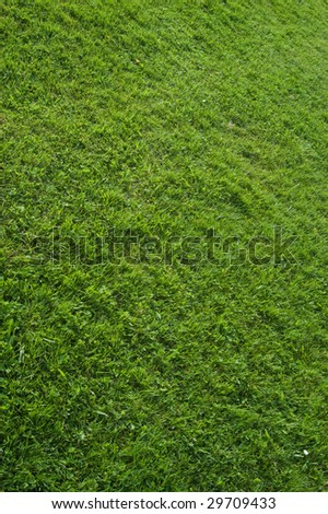 texture background of green grass - stock photo
