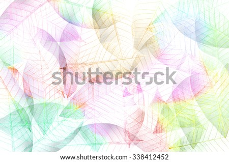 Texture background of leaf structure in colorful tone