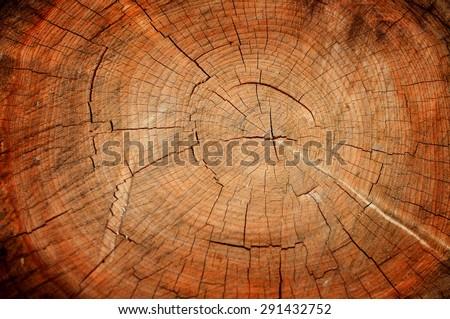 Texture cut wood - stock photo