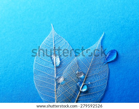 Texture, details. Leaf on the table - stock photo
