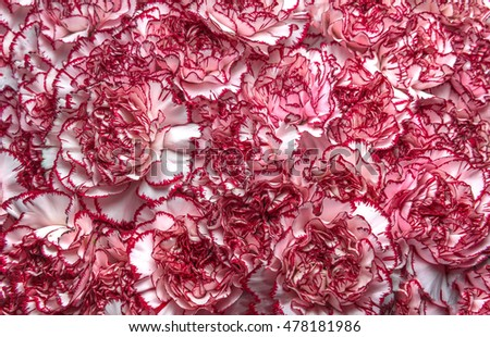 Texture from thousands carnation flowers
