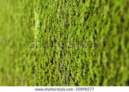 Texture generated by a detail of a green wet moss. - stock photo