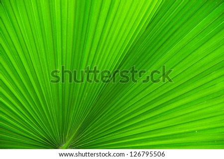 Texture: Green Leaf Texture - stock photo