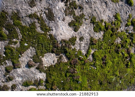 Texture. green moss on granite