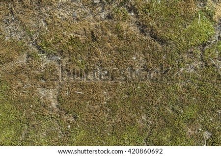 Texture moss broken surface of the earth. - stock photo