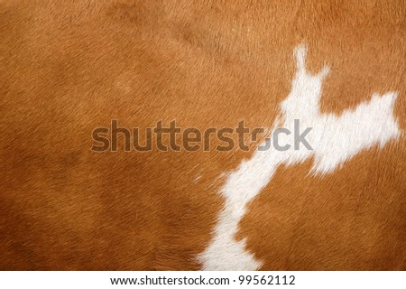 Texture of a brown Cow Coat - stock photo