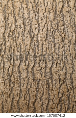 Texture of a brown tree. Whole background. - stock photo