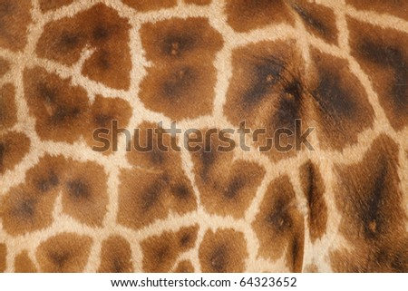 Texture of a giraffe - stock photo