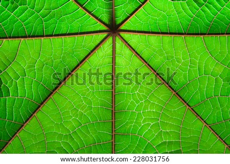 Texture of a green leaf as background - stock photo