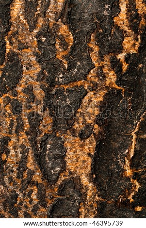 Texture of a tree cortex, close up - stock photo