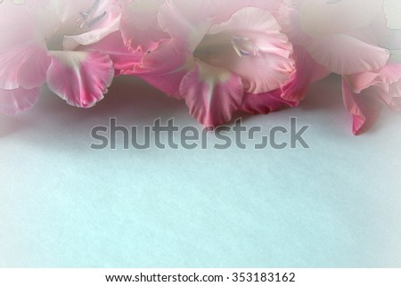 texture of a white background claret Gladiolus - stock photo