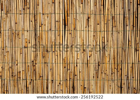texture of bamboo - stock photo