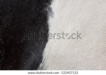 Texture of black and white fur - stock photo