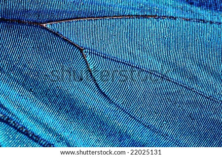 Texture of butterfly wing (blue morpho) - stock photo