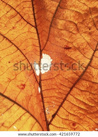 Texture of dead leaf for abstract background.
