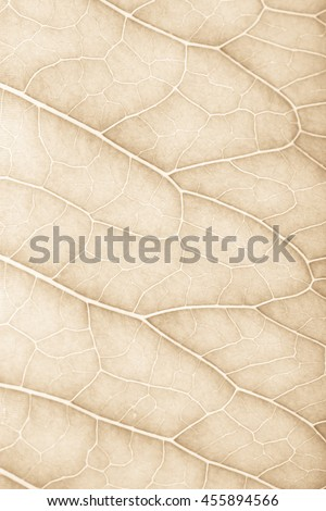 Texture of fresh green leaf for natural background. Toned.