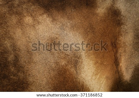 texture of golden coat of horse - stock photo