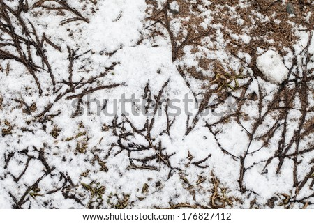 texture of grass and earth through the snow - stock photo