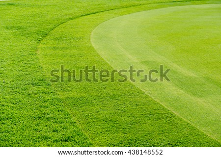 Texture of grass in golf course - stock photo