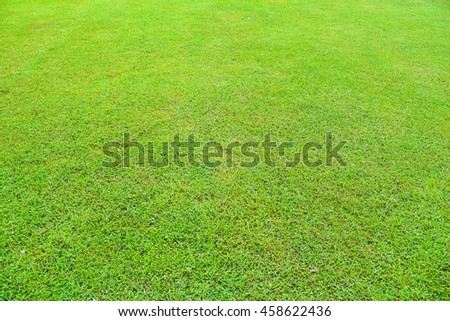 Texture of Green Grass Field  - stock photo