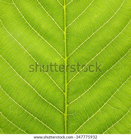 Texture of green leaf - stock photo