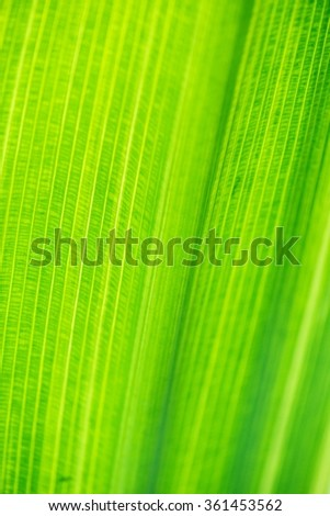 Texture of green leave for your background - stock photo