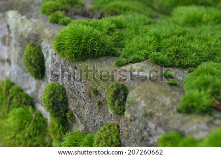 Texture of green moss on a rock. - stock photo