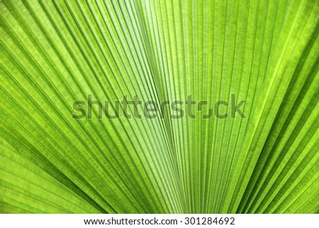 Texture of green palm leaf  - stock photo