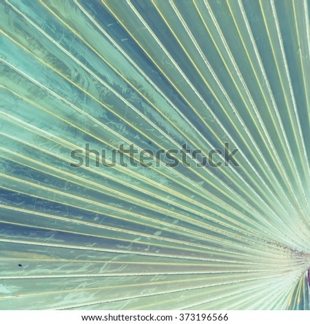 Texture of Green palm Leaf - Stock Image - stock photo
