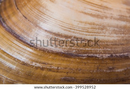 Texture of halves of  freshwater mussels shells   - stock photo