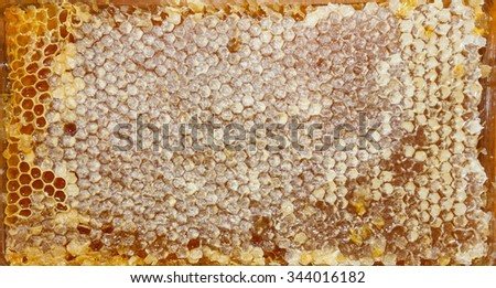 texture of honey in honeycomb on wooden table - stock photo