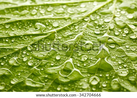 Texture of leaf with drops of water - stock photo
