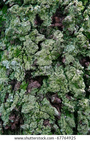 texture of moss on olg tree background - stock photo